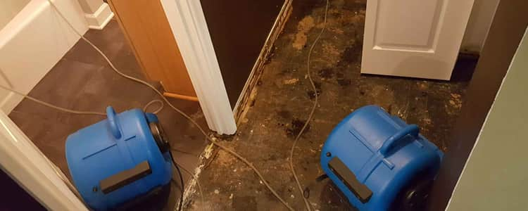Best Flood Damage Restoration Point Cook